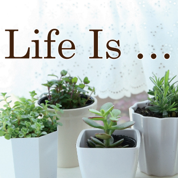 360×360-Life-Is